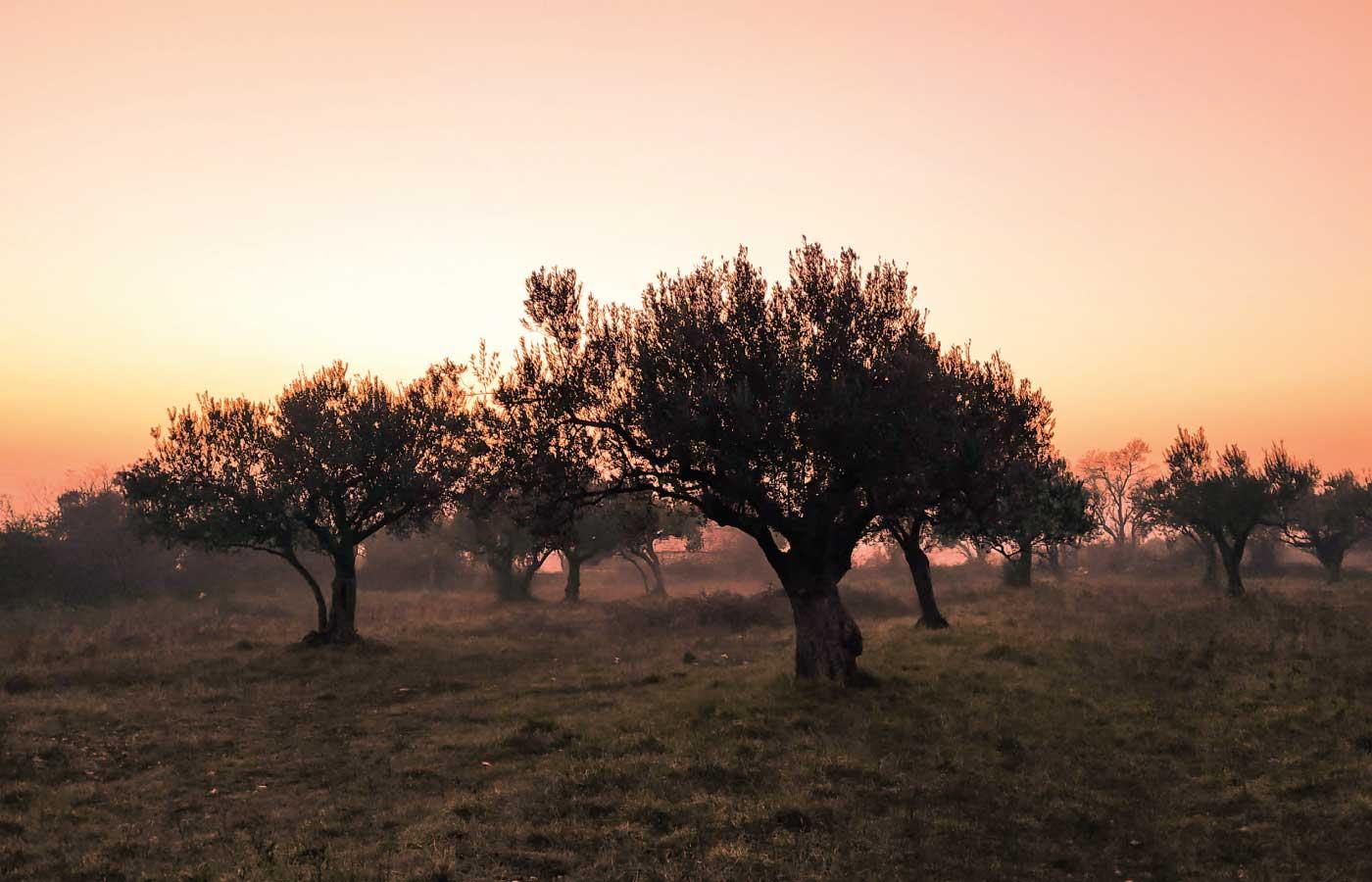 bio vitae aceite de oliva virgen extra ecologico